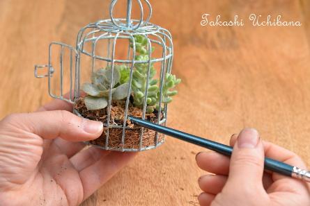 タカシのウチ花 浮かぶ多肉植物 作り方