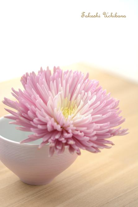 タカシのウチ花 重陽の節句 菊の節句 アナスタシア